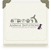 animal intuitions