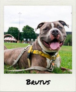 alumni brutus