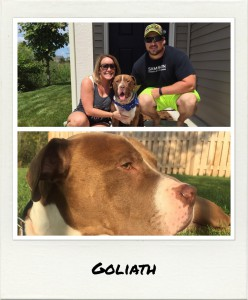 alumni goliath